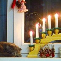 Праздники прошли, а атмосфера дома новогодняя... :: Анна Приходько