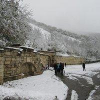 Любопытству зима не помеха. :: Вячеслав Медведев