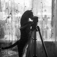 Так, а фотоаппарат куда дели? :: Ирина