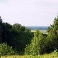 Летняя зелень. :: Светлана Громова