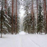 Зимний лес укрылся белою фатою.... :: Павлова Татьяна Павлова