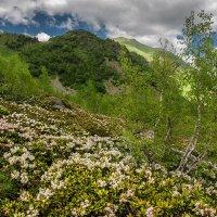 Архыз летом :: anatoly Gaponenko