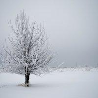 Одинокое дерево. :: Игорь Колеснёв