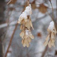 самолетики замерзли :: Елена Мир