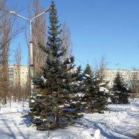 Зимний сквер... :: Сергей Петров