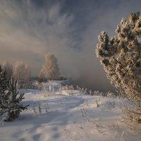 Зимний сон :: Наталия Женишек