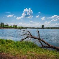 озеро летом :: Алина Гриб