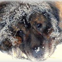 Мороз! :: Сергей Карачин