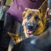 Собака-улыбака) :: Юлия Доронина