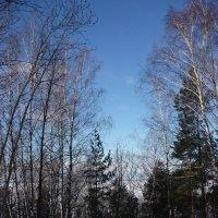 Январский пейзаж :: Ольга