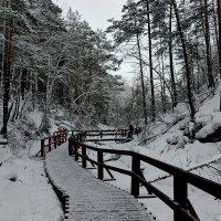 Путешествие в зачарованный лес... :: Наталья Юрова