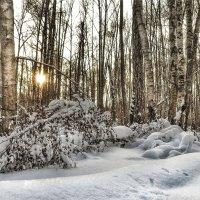 Сумеречный лес :: Va-Dim ...