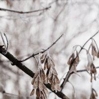 Зима, холода ... :: Ольга Винницкая