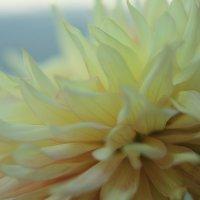 цветок :: Naum