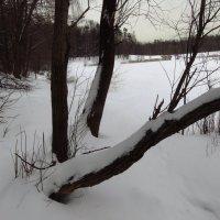 Скромное обаяние московской зимы :: Андрей Лукьянов