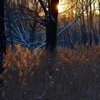 В отблесках заката... :: Ольга Русанова (olg-rusanowa2010)