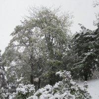 Всё как всегда - зима пришла неожиданно. :: Вячеслав Медведев