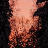 На фоне вечернего неба :: Наталья Пендюк Пендюк