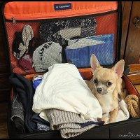 -Приехали, открыли чемодан, а там....! :: Григорий Кучушев