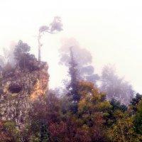 Туман :: Геннадий Клевцов