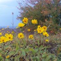 Осенние цветы :: Любовь К.