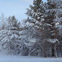 зимний :: зоя полянская