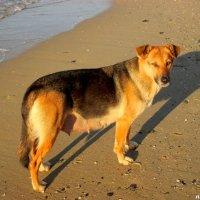 На анапском пляже... :: Нина Бутко