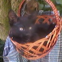Котёнок в корзинке :: Тоня Просова