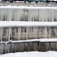 Зима в ботаническом саду :: Наталия Короткова