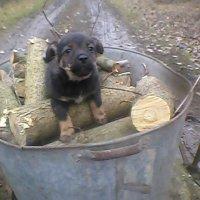 Маленький Пушык катается на дровах :: Тоня Просова