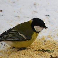 Из жизни птиц :: Татьяна
