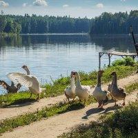 Лесное озеро :: Александр Орлов