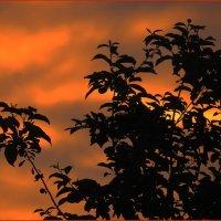 Июльский закат :: Светлана