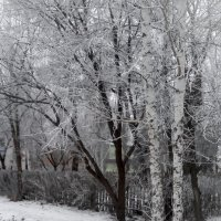 Зимняя зарисовка :: Людмила