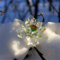 В разгар зимы вдруг захотелось волшебства.. :: Андрей Заломленков