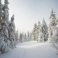 Утренняя, морозно-рассветная :: Владимир Кочкин
