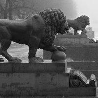 """""""Ну.,что брат неповезлом нам с городом дождь, сырость., а теперь ещё и туман""""..))) :: tipchik"""