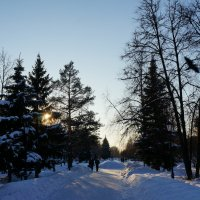 Январские прогулки :: Алёна Савина