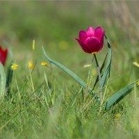 Аленький цветочек :: Анна Солисия Голубева