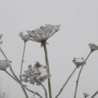 ледяной цветок :: Дмитрий Денисов