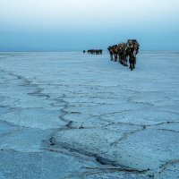 Караваны пустыни Данакиль :: Евгений Печенин