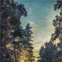Зимний вечер в Славутиче. :: Константин Ушмаев
