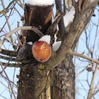 Морозильное яблоко :: Елена Безнасюк
