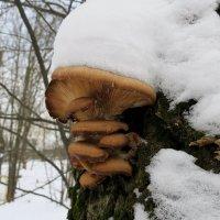 За грибами в Январе ! :: Андрей