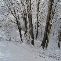 зимний лес :: Вадим Бурмистров