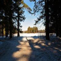 Глядя из тёмного леса... :: Sergey Gordoff