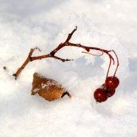 Зимние витаминки :: Андрей Заломленков