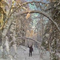 в зимнем лесу... :: юрий иванов