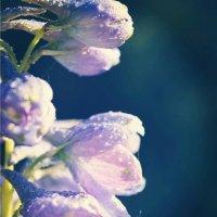 Цветы после дождя... :: Виктория