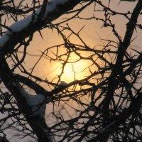Зима...снег... солнце... :: Вячеслав Медведев